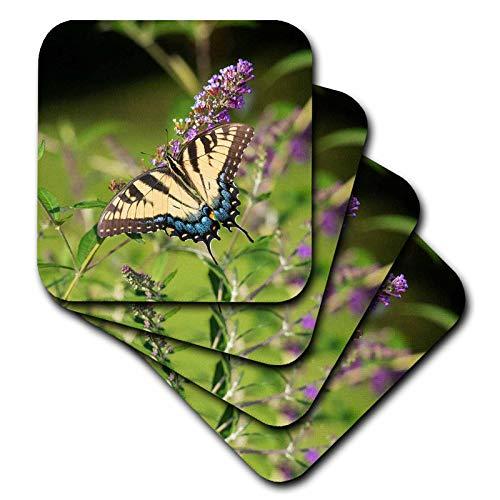 3dRose Danita Delimont - Butterflies - Eastern Tiger Swallowtail on Butterfly Bush, Illinois - set of 4 Ceramic Tile Coasters (cst_314820_3)