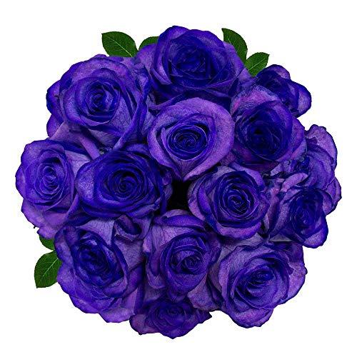 FRESH Tinted Roses  Purple  25 stems (Meteorite Rose) Magnaflor - XXL Blooms  Bunch  10-12 days vase Life by Magnaflor - Wholesale Roses & More
