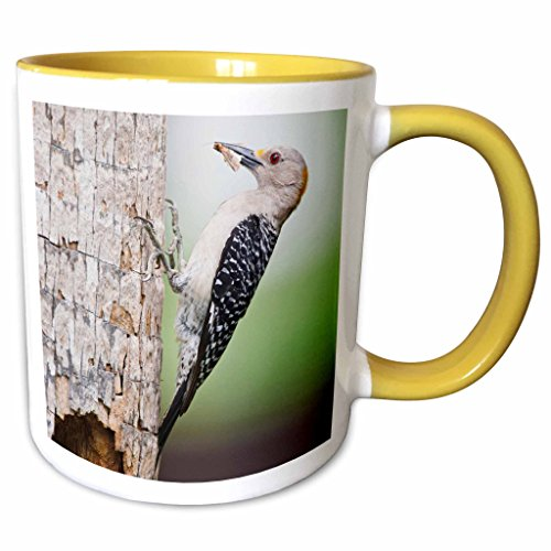 3dRose Danita Delimont - Birds - Golden-fronted Woodpecker bird, McAllen, Texas, USA - US44 LDI0646 - Larry Ditto - 11oz Two-Tone Yellow Mug - Outlets Mcallen