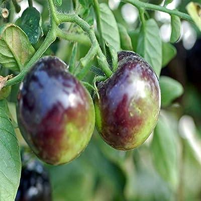 Tomato Garden Seeds - Indigo Rose - Non-GMO, Heirloom, Vegetable Gardening Seed