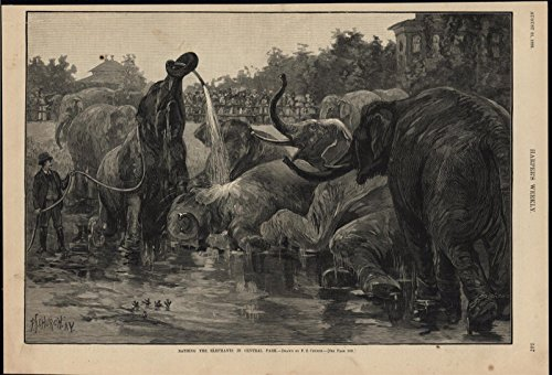 Bathing Elephants Central Park New York City 1886 antique wood engraved print