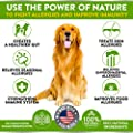 Best Allergy Relief Immune Supplement for Dogs - for Seasonal & Food Allergies - Skin Itch, Hot Spots and More - Supports Digestive & Skin Health - Pet-Safe - Made in USA - 170 Chews Treats