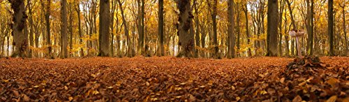 Laminated Poster Autumn Forest Panorama Nature Print