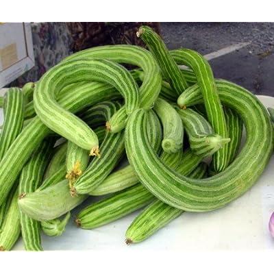 Armenian Slicing Cucumber 50 Seeds - Garden Fresh Pack! : Garden & Outdoor
