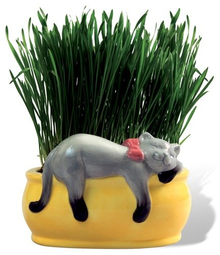 Chia Cat Grass Planter Snoozing Kitty Cat - Amazon.com: Chia Cat Grass Seeds 6 Count: Patio, Lawn & Garden