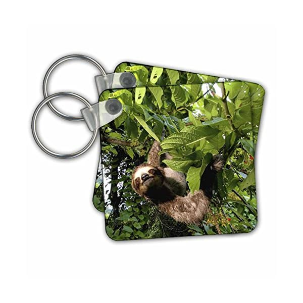 Kc_86913 Danita Delimont - Wildlife - Panama, Panama City, Three-Toed Sloth Wildlife - Sa15 Czi0561 - Christian Ziegler - Key Chains -