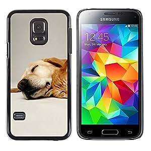 TopCaseStore / la caja del caucho duro de la cubierta de protección de la piel - Labrador Retriever Pet Dog Golden - Samsung Galaxy S5 Mini, SM-G800, NOT S5 REGULAR!