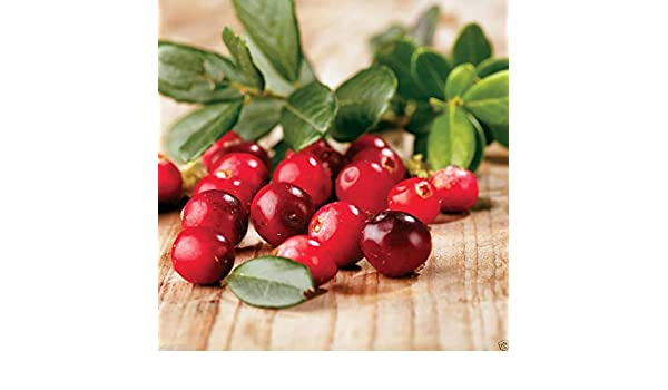Pinkdose 300 Seeds: American Cranberry seeds used in a variety of sauces 300 Seeds Vaccinium macrocarpon