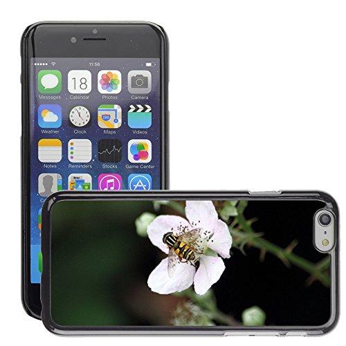 """Bild Hart Handy Schwarz Schutz Case Cover Schale Etui // M00133314 Schwebfiege Fliege auf Blume // Apple iPhone 6 PLUS 5.5"""""""