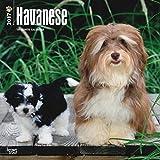 Havanese Dogs Wall Calendar 2018 {jg} Best Holiday Gift Ideas - Great for mom, dad, sister, brother, grandparents, , grandchildren, grandma, gay, lgbtq.