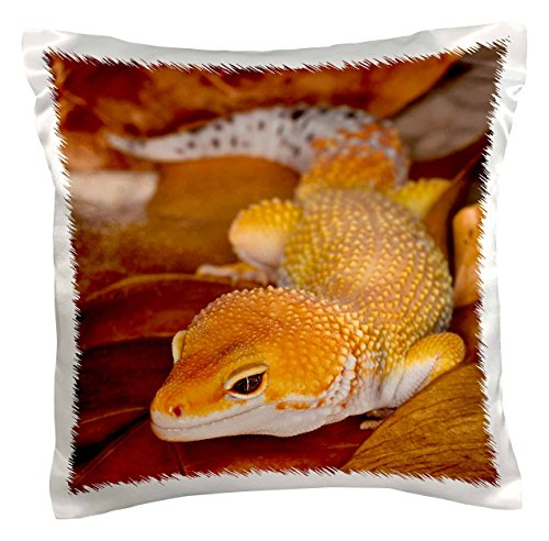 (3dRose pc_73099_1 Leopard Gecko Morph, Lizard, Pakistan-AS28 AJE0000-Adam Jones-Pillow Case, 16 by 16