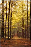 Trees - Path Through the Forest - Nature 12x18 Poster