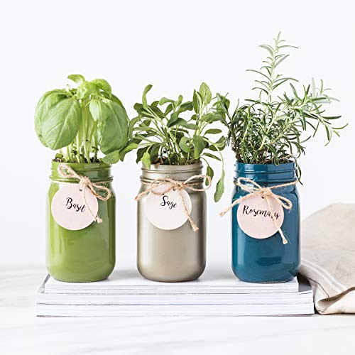 - Thoughtfully Gifts, Mason Jar Garden, Grow Your Own Herbs Gift Set, Contains Rosemary, Basil and Sage Seeds with 6 Soil Pods