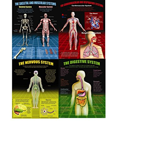 McDonald Publishing Mc- The Human Body Poster Set, 17.6 Wide, 21.6 Length, 0.1 Height