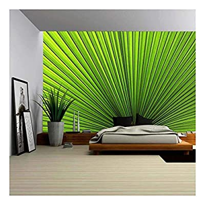 Texture of Green Palm Leaf, That You Will Love, Elegant Expertise