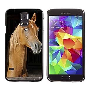 Etui Housse Coque de Protection Cover Rigide pour // M00110552 Caballo pura sangre árabe Animal // Samsung Galaxy S5 S V SV i9600 (Not Fits S5 ACTIVE)