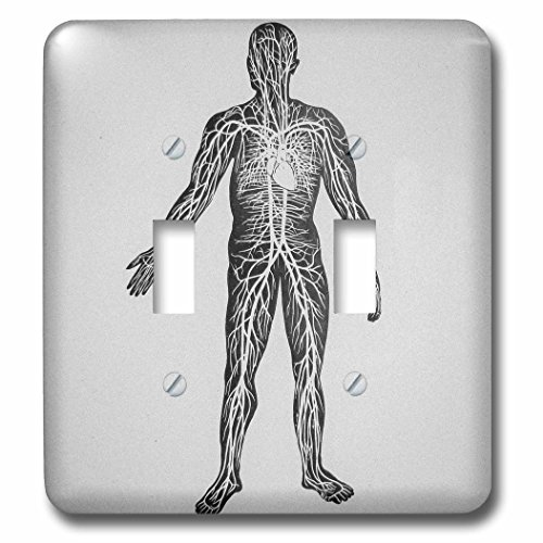Scenes from the Past Magic Lantern Slides - Vintage Medical Study Glass Slide the Human Circulatory System 1900 - Light Switch Covers - double toggle switch (lsp_246877_2) by 3dRose