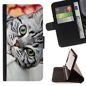 KingStore / Leather Etui en cuir / Samsung Galaxy S3 MINI 8190 / British Shorthair gris Wirehair Cat House