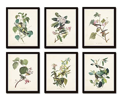 Amazon.com: Audubon Birds Print Set No.24 Set of 6 Vintage