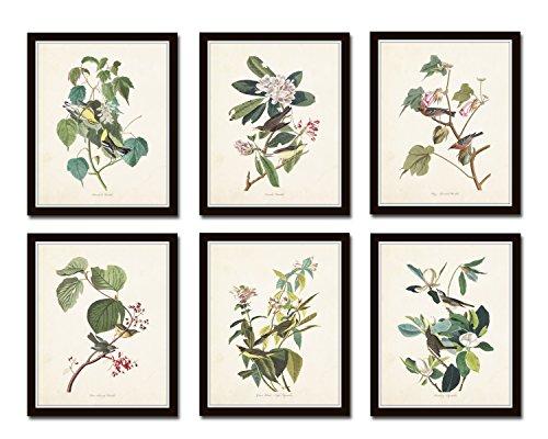 (Audubon Birds Print Set No.24 Set of 6 Vintage Audubon Bird Prints -)