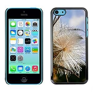 Print Motif Coque de protection Case Cover // M00246870 Semillas de frutas Thistle naturaleza // Apple iPhone 5C