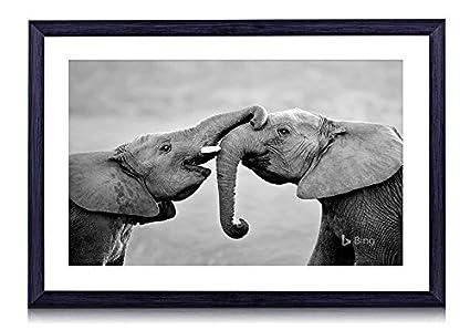 Amazon.com: elephant-wild animal - Art Print Black Wood Framed Wall ...