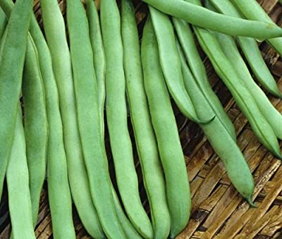 The Dirty Gardener Kentucky Wonder Bush Bean Seeds, 14 Grams