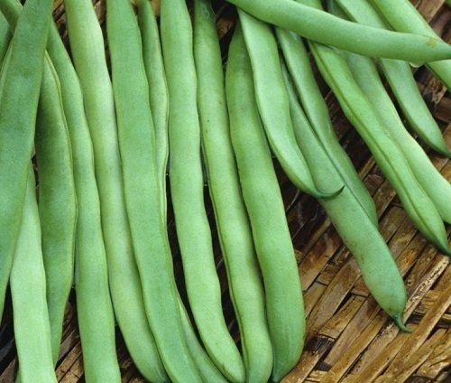 The Dirty Gardener Kentucky Wonder Bush Bean Seeds, 14 Grams (Beans Bush Kentucky Wonder)
