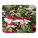 "Emvency Mouse Pads Bloom Green Beautiful Fuchsia Hybrida in Greenhouse Moscow Region Russia Red Beauty Blossom Mouse Pad 9.5"" x 7.9"" for Notebooks,Desktop Computers Mouse Mats, Office Supplies"