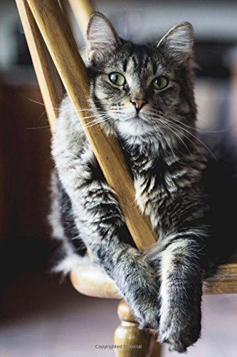 Download Gray and Black Striped Cat on a Chair Portrait Pet Journal: 150 Page Lined Notebook/Diary PDF