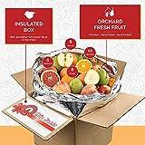 Gourmet Fruit Basket, (20lbs) of