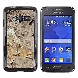Etui Housse Coque de Protection Cover Rigide pour // M00133572 Meerkat Animal fotografía de la fauna // Samsung Galaxy Ace4 / Galaxy Ace 4 LTE / SM-G313F