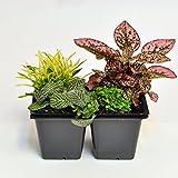 Terrarium and Shade Plant Assortment for Miniature Garden, Fairy Garden