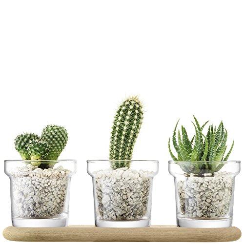LSA International Plant Vase, Trio Pot Set & Oak Base, H11.5cm, Clear - Vases Trio
