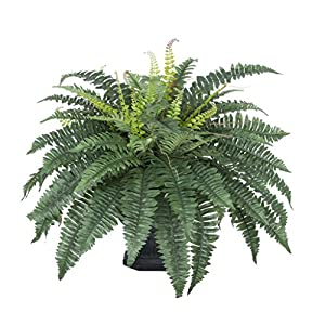 House of Silk Flowers Artificial Fern in Black Garden Urn 21