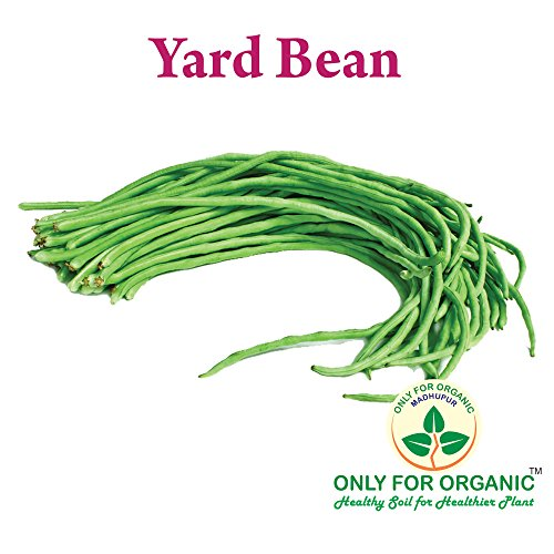 Only for Organic ! Yard Beans Seeds : 10 Seeds !