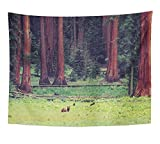 Emvency Tapestry California Bear in Wild With Cubs Sequoia National Park America American Canyon Home Decor Wall Hanging 60'' x 80'' Inches Print For Living Room Bedroom Dorm