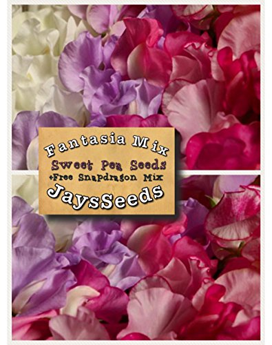 (Fantasia Mix Sweet Pea 35 Seed UPC 600188190434 + Free Pack Mixed Snapdragons)