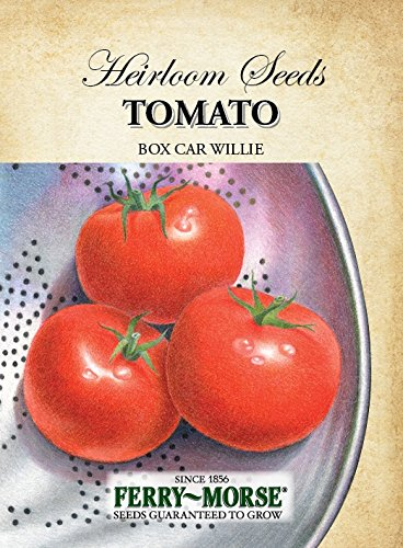 Ferry-Morse Heirloom Tomato Box Car Willie (Ferry Morse Tomato Seed)