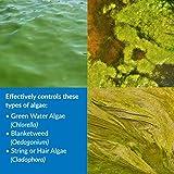 API POND ALGAEFIX Algae Control 32-Ounce