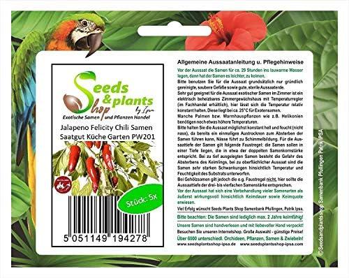 Stk - 5x Jalapeno Felicity Chili Samen Saatgut Küche Garten PW201 - Seeds Plants Shop Samenbank Pfullingen Patrik Ipsa
