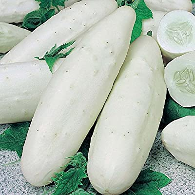 Cucumber Seeds - 120 Count - Type: White Wonder Cucumbers - 99.9% Purity! - (Isla's Garden Seeds) - Non GMO - Total Quality! White Cucumbers