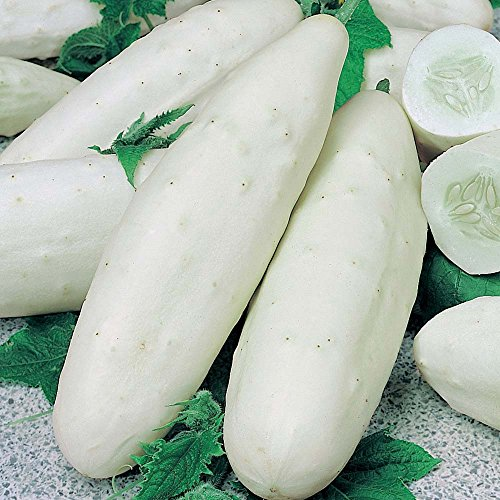 White Wonder Cucumber Seeds! - 120 Heirloom Seeds! - 99.9% Purity! - SPRING SALE! - (Isla's Garden Seeds) - Non GMO! - Organic Survival Seeds - Total Quality!