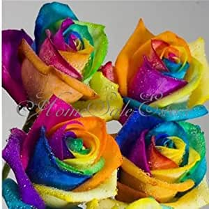 50pcs rare rainbow rose flower seeds your for Growing rainbow roses from seeds