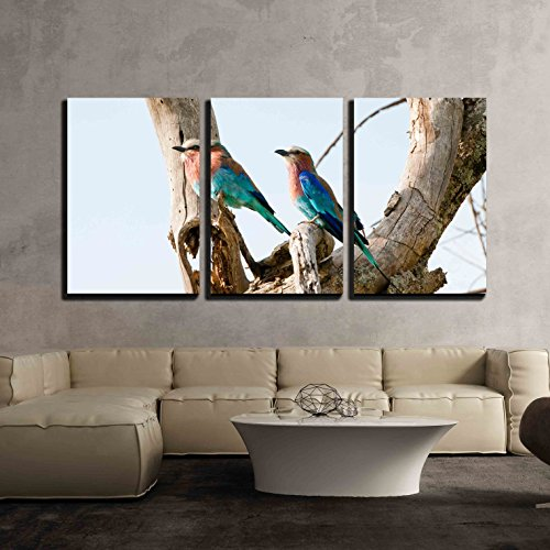 wall26 - 3 Piece Canvas Wall Art - two lilac breasted rollers on a tree - national park masai mara in kenia - Modern Home Decor Stretched and Framed Ready to Hang - 24
