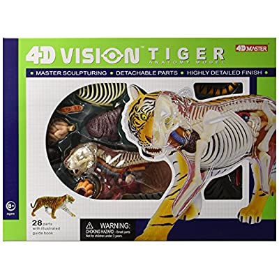 Famemaster 4D Vision Tiger Anatomy Model: Toys & Games