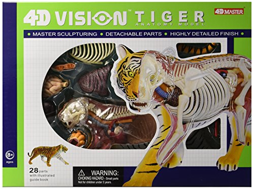 Famemaster 4D Vision Tiger Anatomy Model