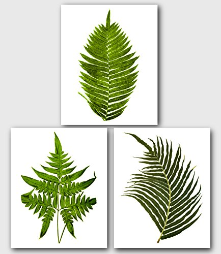 Fern Botanicals, Set Of 3 Prints, 8 x 10 Inches, Unframed