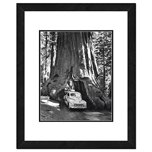 Photo File Wawona Tree/Sequoia Tree from Photo File