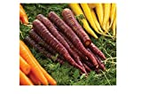 David's Garden Seeds Carrot Deep Purple SL2737 (Purple) 500 Non-GMO, Hybrid Seeds
